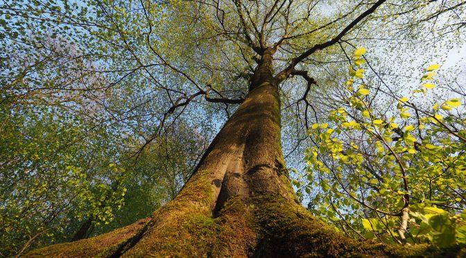 Link-Tip: Wie man (eindrucksvoll) Bäume fotografiert!
